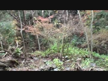 カメ五郎の狩猟生活(その3)