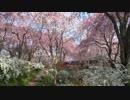 春の京都(2014/4/10の桜情報他)