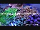 【ニコニコ動画】【海水立ち上げ】0から始めるマリンアクアリウム PART1を解析してみた