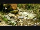吉野山上千本辺りの切り株と湧き水@20140416
