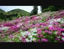 春の京都(2014/5/6)
