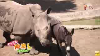 グルジアの動物園で仲良く暮らすサイとロバが話題に