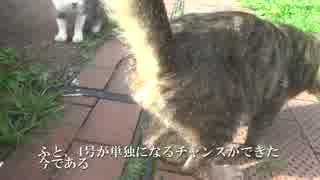 【ω】キジトラ猫のωモフりに挑戦してみた