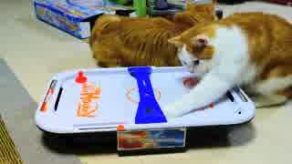 【マンチカンズ】猫がエアホッケーに興奮!?