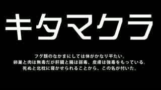 【体験旅】GSR250のために、海釣りに挑戦!【バイク車載動画】