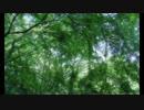 ナンバーズハンターの森