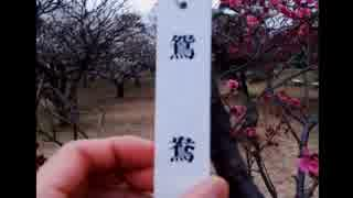 2014年03月19日 風邪治りかけリハビリ散歩 - 小金井公園 Part5