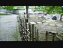 仙台市・魯迅碑前の記念植樹 許広平(1961)の黒松、江沢民(1998)の紅梅