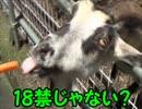 【旅動画】男二人きりで行く日本開拓旅行記Part.1【茨城編】