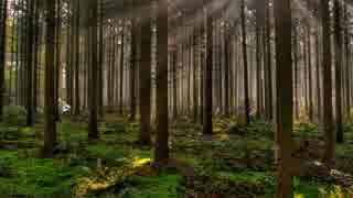 【艦これ】時津風の森