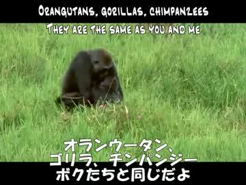 歌詞 サル ゴリラ チンパンジー