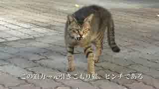 【公園猫戦争】まさかの対決!暴虐の流れキジトラVS元・引きこもり猫
