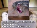 やる夫で学ぶ巨大生物2【アナコンダvsアミメニシキヘビ】