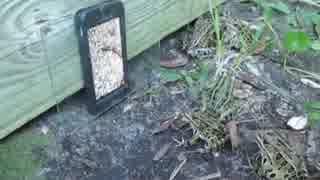 カエルにスマホ、スマートフォンでミミズ