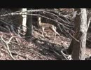 カメ五郎の狩猟生活(その23)