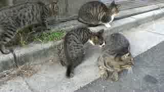 【猫変態】保護者オス猫、子猫たちに痴態