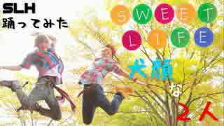 【犬顔】Sweet Lifeを踊ってみた【SLH】