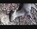 カメ五郎の狩猟生活(その26)