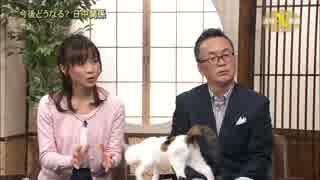 テレ東ニュース番組の2代目看板猫がやりた