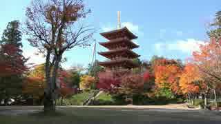 京都(宮津・舞鶴)の紅葉【2014/11/16】