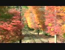 【4K】叡山電鉄・もみじのトンネル(2014/11/23)