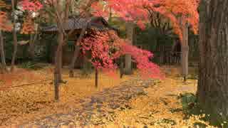 (4K)京都・洛北の紅葉【2014/11/23】