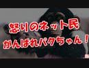 【怒りのネット民】 がんばれパクちゃん!