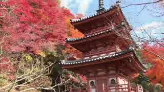 紅葉の京都(2014/11/27)