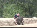 飼育員さんのひざに座りたい小ゾウ