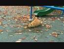 【公園猫戦争】公園の茶トラ3兄弟、公園の穴にハマる