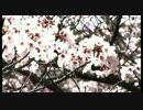 次世代の党 西日本応援動画 凛として咲く花の如く