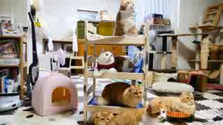 【マンチカンズ】猫専用の3段ベッド