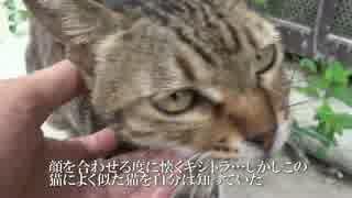 人懐こいメスキジトラ猫、幸せをつかむ