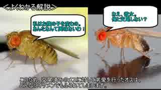 ゆっくり動物雑学「ふられたオスのハエは…」