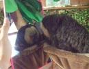 実験!ナマケモノに鏡を見せてみた(ペット 動画、生物、犬、猫、動物)