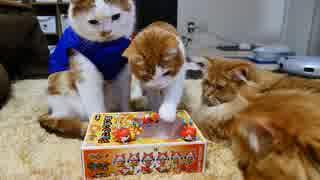 【マンチカンズ】猫たちの前でジバニャン