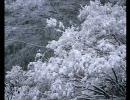 初音ミク「Powder Snow」【オリジナル曲】