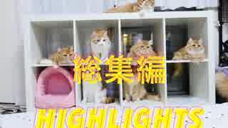 【マンチカンズ】短足猫マンチカン一家の総集編2014