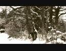 「アメーバvsT-REX」JAP自主制作映画PART2