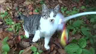 【猫の捕獲ドキュメント2】猫夫婦捕獲完了