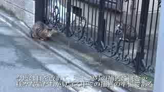 【猫の捕獲ドキュメント3】猫母子のうち、