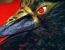 仮面ライダー 第52話「おれの名は怪鳥人ギルガラスだ!」
