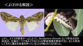 ゆっくり動物雑学「植物が出す警戒物質を…」