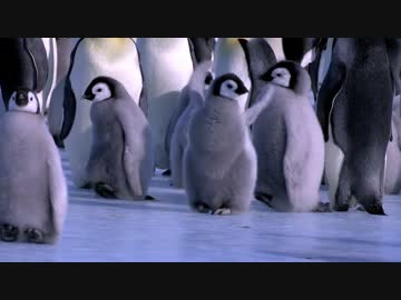 滑ってコケちゃう世界中のペンギン詰め合わせ