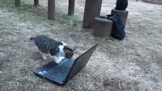 【実験】公園の猫達に猫動画を見せたらど