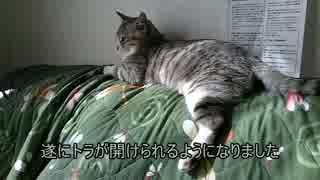 【シロとトラ】 トラがけしからん???
