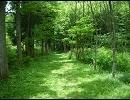 あの森で待ってる(remix)