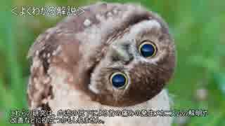 ゆっくり動物雑学「フクロウが首を回して