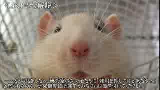 ゆっくり動物雑学「男の臭いに…」