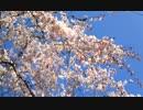 【春ニカ祭2015】春と風_0.8【NNIオリジナル曲】